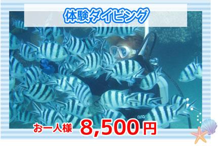 体験ダイビング8500円
