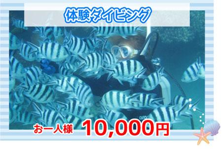 体験ダイビング10000円