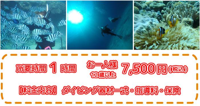 瀬底島近海体験ダイビング