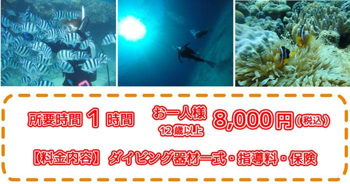 瀬底島近海体験ダイビング8000円